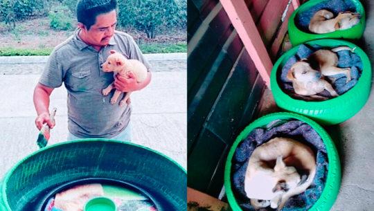Guatemalteco fabrica camas para perros con llantas usadas