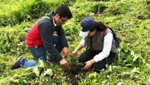 Jornada de reforestación en Ciudad de Guatemala | Mayo 2019