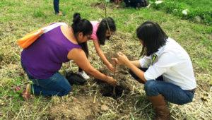 Reforestación en el Trébol de Vista Hermosa, Zona 15 | Mayo 2019