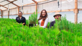 Sembrarán 120,000 árboles en el departamento de Totonicapán durante 2019