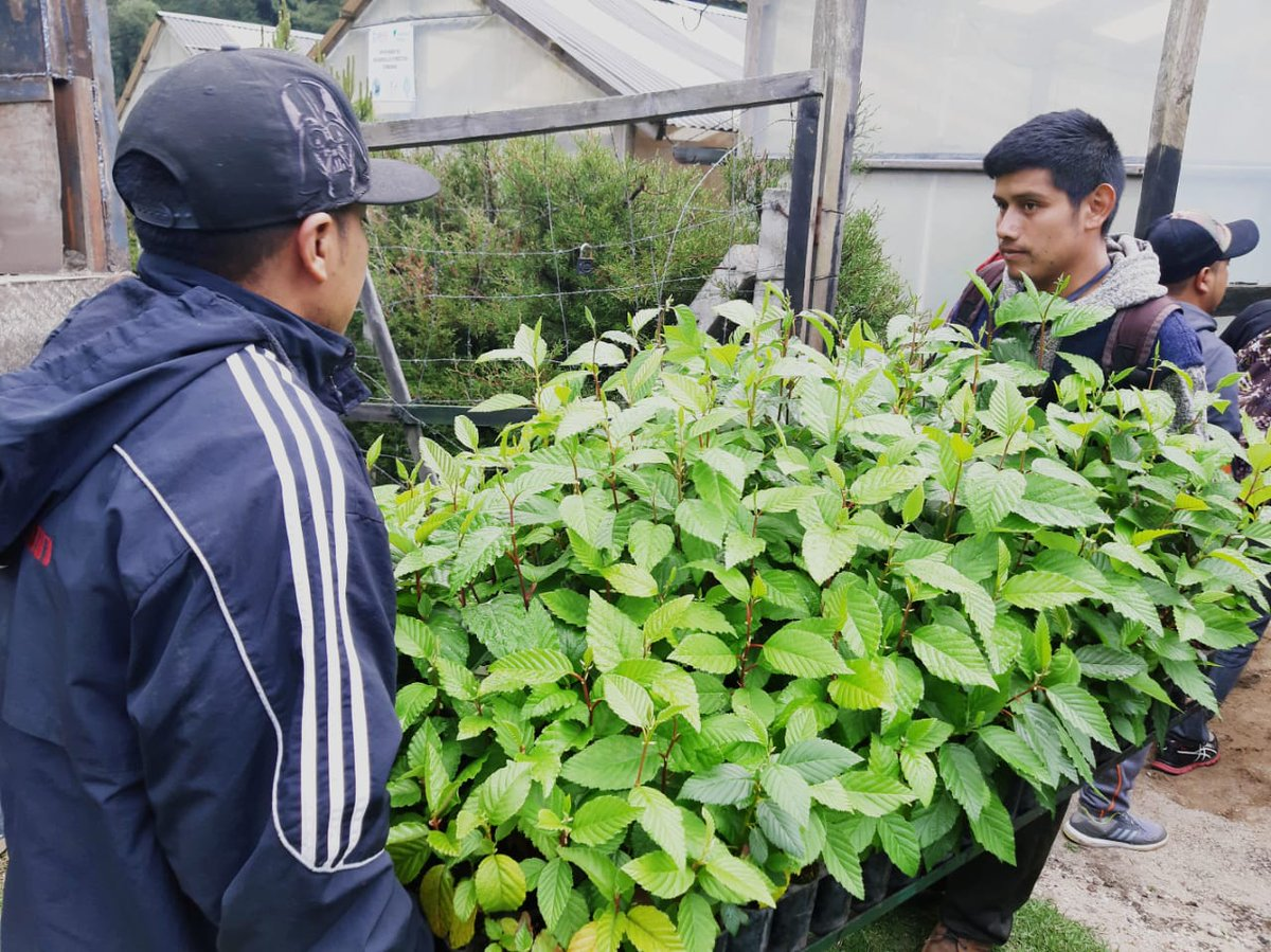 Sembrarán miles de árboles en Totonicapán