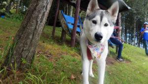 Viaje de ascenso al Cerro Panul con mascotas | Agosto 2019