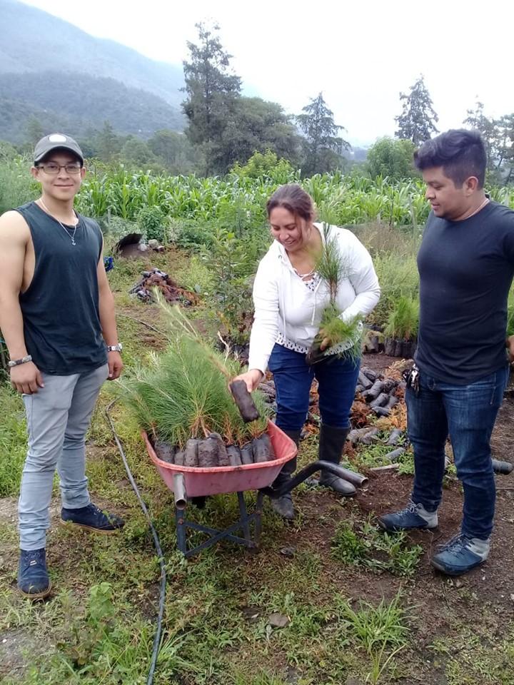 Cómo ser voluntario en la reforestación