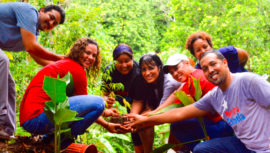 Convocatoria de voluntarios para sembrar 3 millones de árboles en Guatemala
