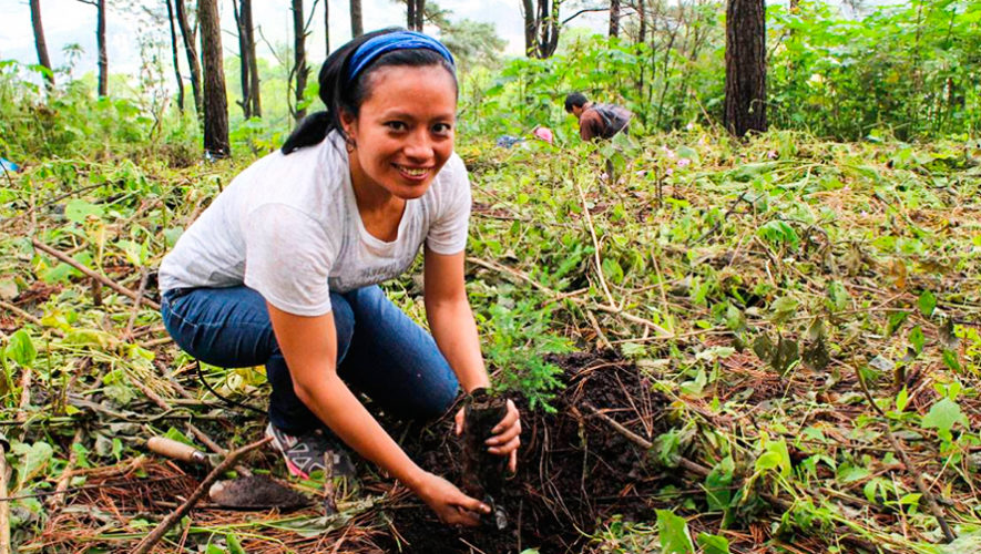 Convocatoria de voluntarios para sembrar árboles en Guatemala en junio de 2019