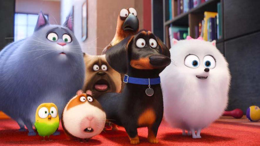 Estreno en Guatemala de la película La Vida Secreta de tus Mascotas 2 | Junio 2019