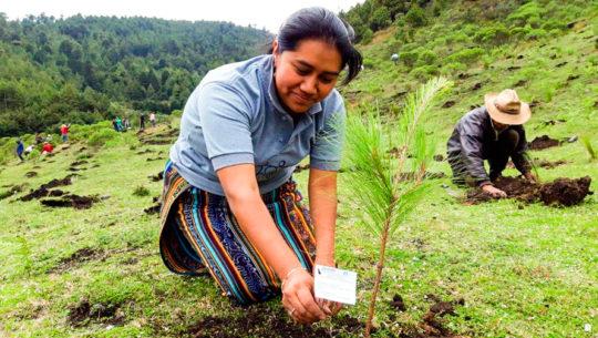 Guatemaltecos sembraron 3,000 árboles de Pino y Ciprés en San Pedro Soloma, Huehuetenango