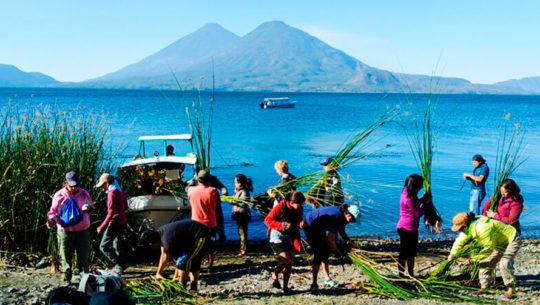 Guatemaltecos siembran tul para conservar el Lago de Atitlán, Sololá