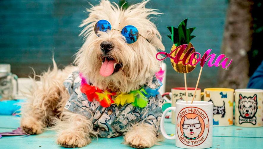 Pasarela de modas de perritos Westy Terrier | Junio 2019