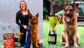 Pastor alemán de guatemalteca fue el mejor perro en competencia canófila en México
