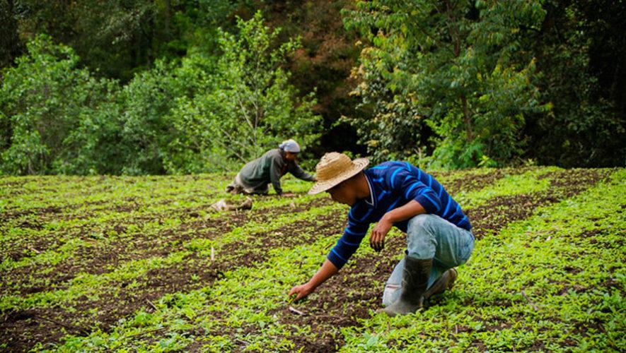 Agricultura Familiar Guatemala ONU Economia