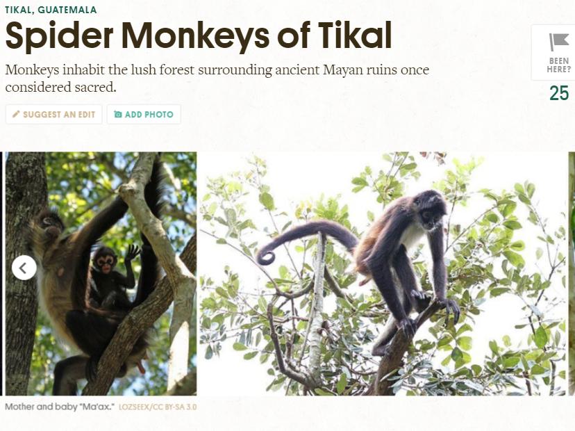 Atlas Obscura dio a conocer a los monos araña que habitan en el Parque Nacional Tikal