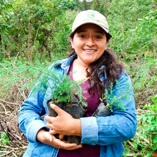 Buscan voluntarios para sembrar árboles en Guatemala en julio de 2019