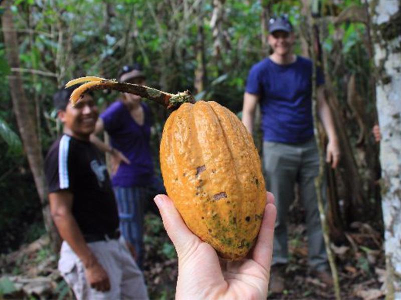 Cacao en Guatemala