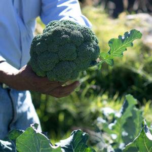Grupo DetPon Guatemala Exportacion Vegetales frutas