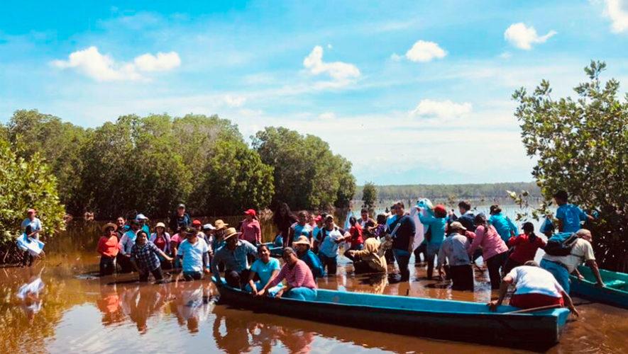 Guatemaltecos sembraron 36,000 plantas de Mangle Rojo en Manchón Guamuchal, Retalhuleu