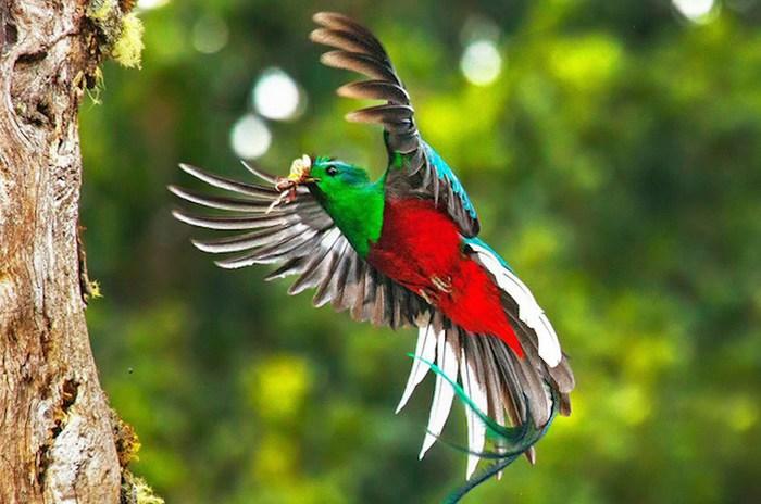 Leyenda del Quetzal fue destacada por National Geographic En Español 2019