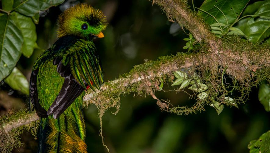 Leyenda del Quetzal fue destacada por National Geographic En Español