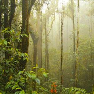 Reducción de emisiones Guatemala CO2