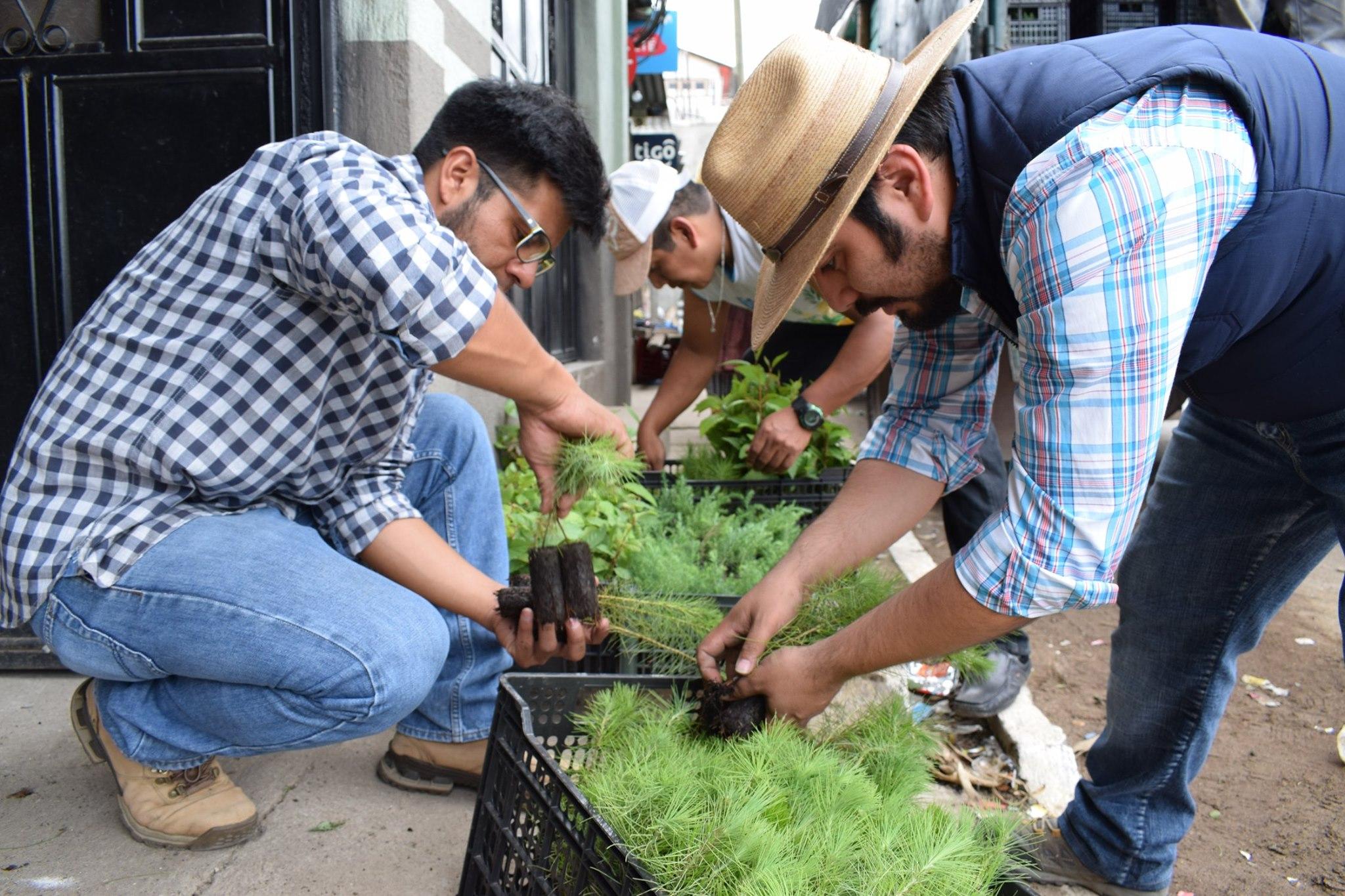 Sembrarán 265,000 árboles en los pueblos alredor del Lago de Atitlán durante 2019