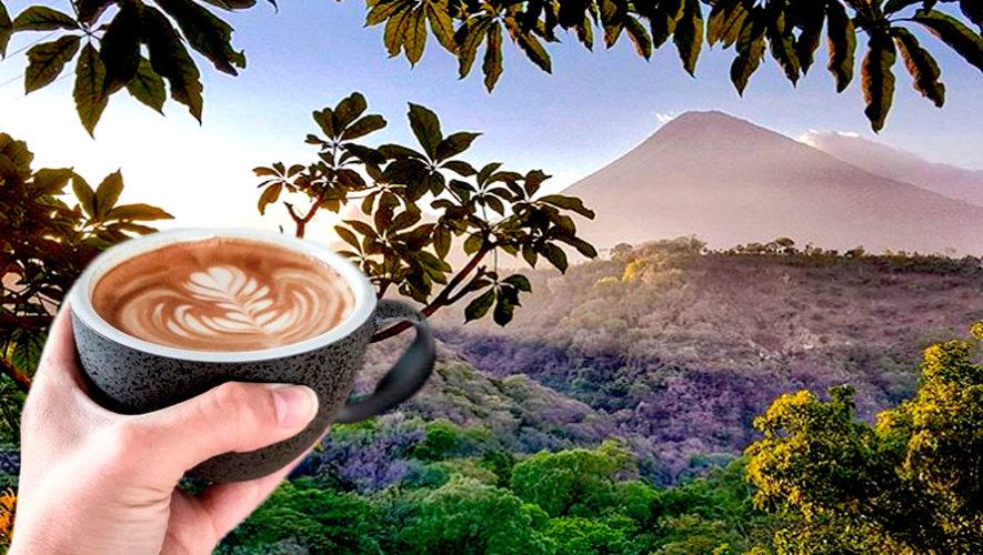 Tour de café en Finca El Barretal | Julio 2019