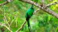 Viaje al Biotopo del Quetzal en Baja Verapaz | Julio 2019