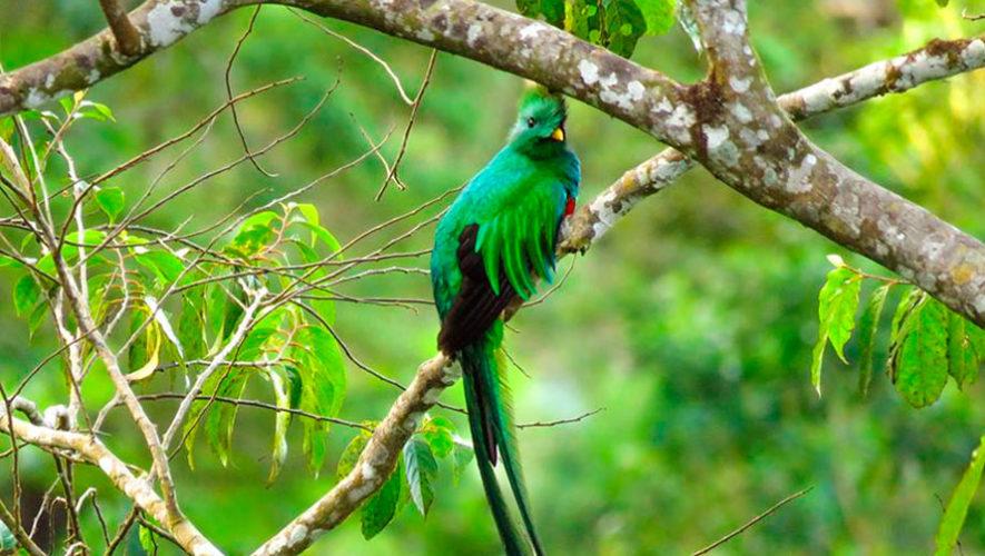 Viaje al Biotopo del Quetzal en Baja Verapaz   Julio 2019