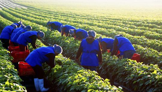 Grupo DetPon cumplió 27 años de exportar fruta y vegetales guatemaltecos