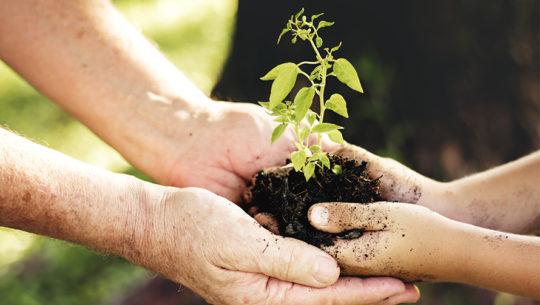 Reto 10-500, proyecto de restauración ecológica en Petén