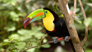 Conteo de aves en el Parque Nacional Tikal | Diciembre 2019