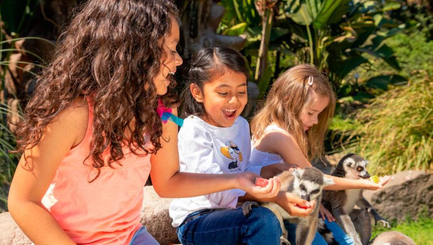 Día del Niño en el Zoológico La Aurora | Septiembre 2019