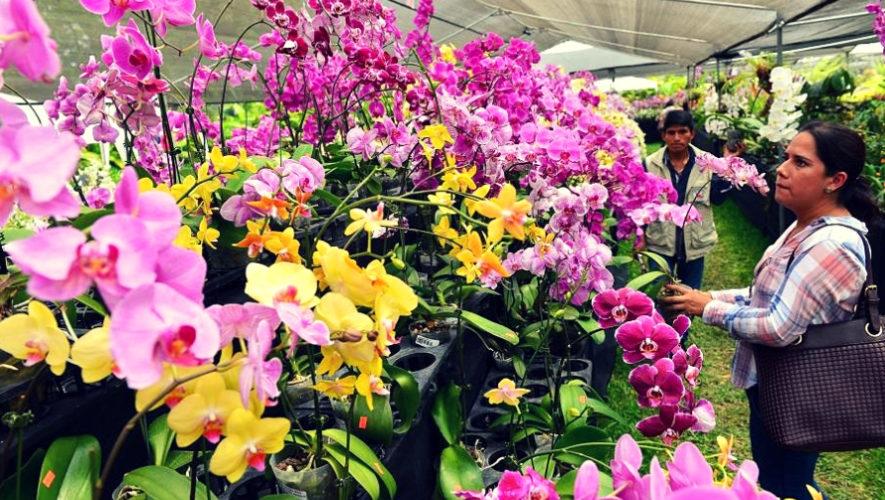 Exposición de orquídeas en Ciudad de Guatemala | Septiembre 2019