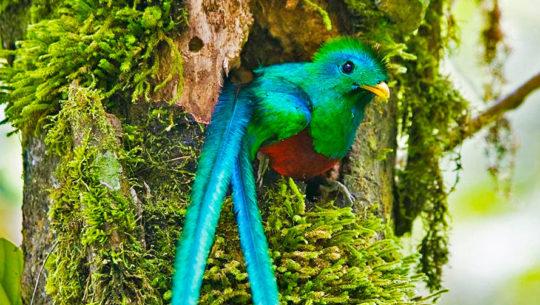 La mejor época para observar al Quetzal en Guatemala