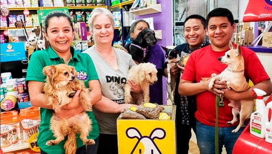 Recaudan concentrado para perritos rescatados en la Ciudad de Guatemala durante 2019
