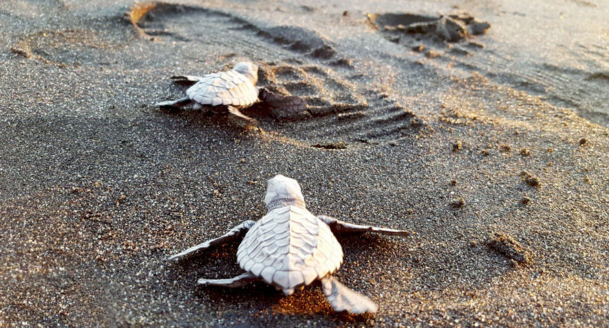 Viaje a los manglares para liberar tortugas, en Monterrico   Septiembre 2019