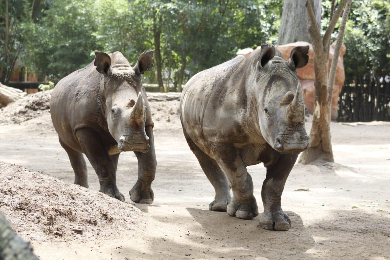 nuevos huéspedes del Zoológico La Aurora en la Ciudad de Guatemala