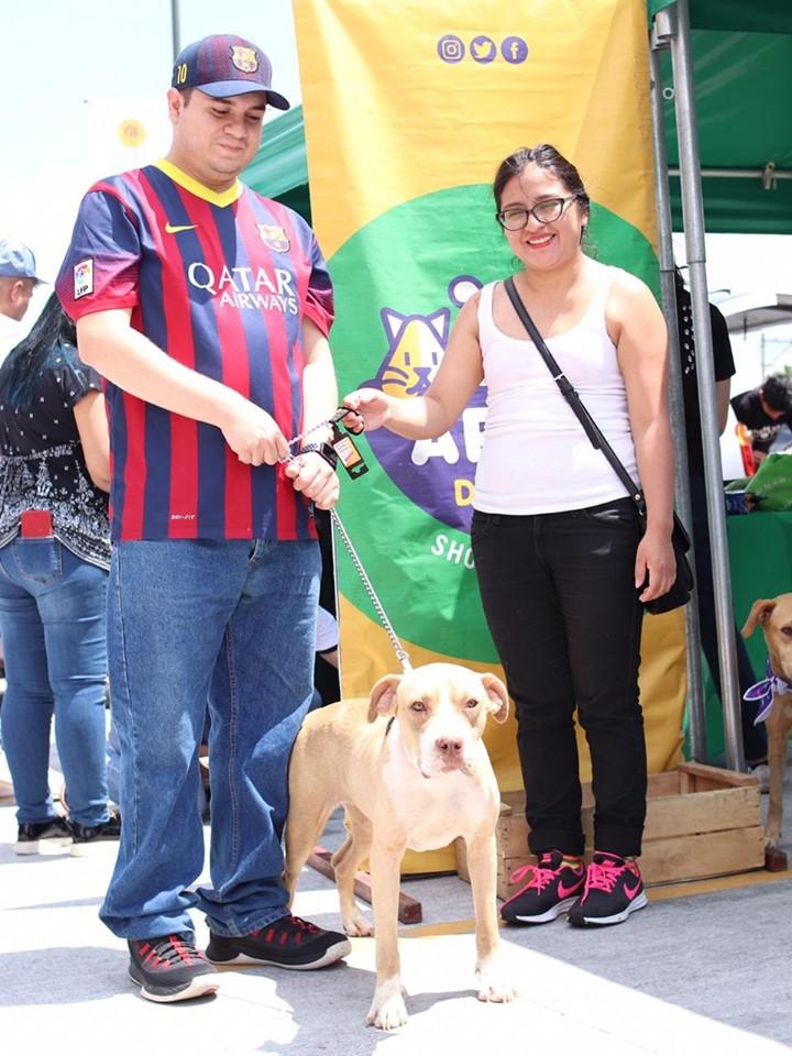 (Foto: Guate unida por los Animales)