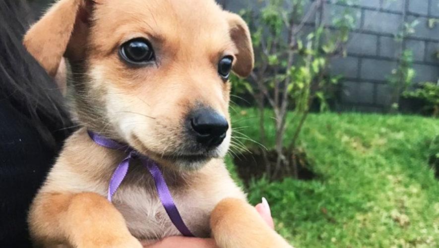 Cena a beneficio de Guate Unida por los Animales | Octubre 2019