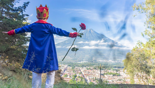 Concurso de rosas inspirado en El Principito para el Festival de las Flores 2019