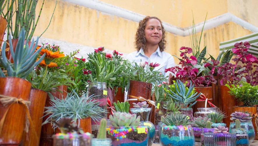 Exposición de plantas exóticas en Antigua Guatemala | Noviembre 2019