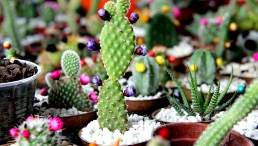 Bazar de plantas exóticas en Zona 9 | Octubre 2019