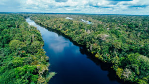 Festival para recaudar fondos y ayudar al Amazonas   Octubre 2019