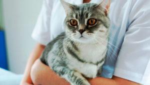 Jornada de esterilización felina en Mixco | Octubre 2019