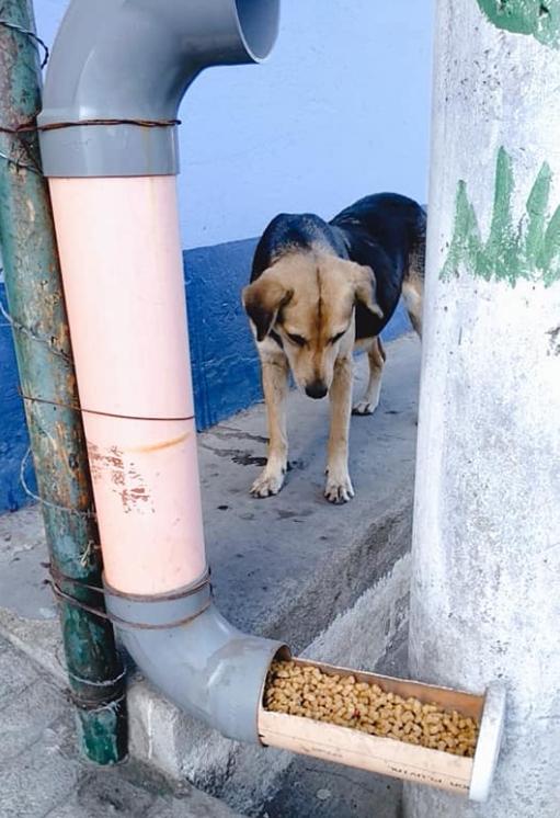 Universitarios instalarán comedores para perros sin hogar en Guatemala