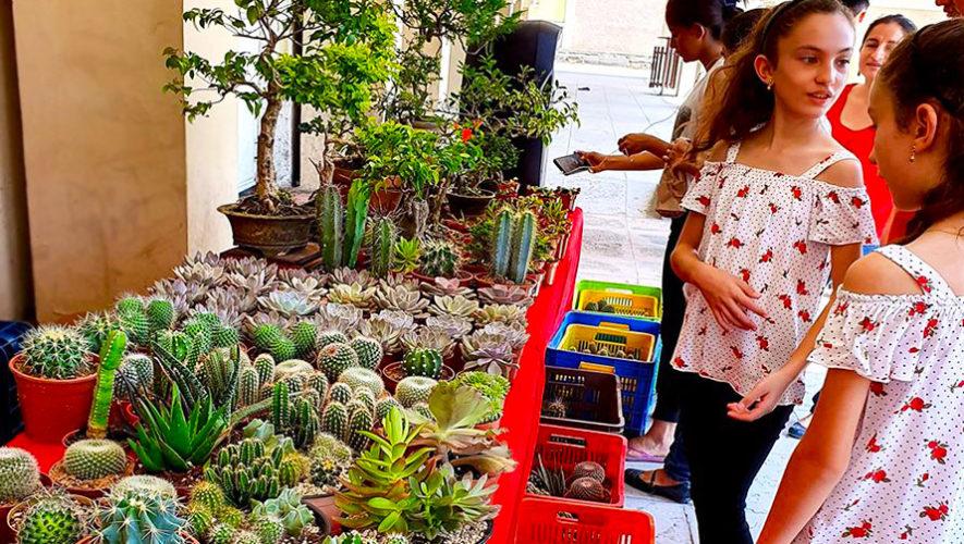 Festival navideño de plantas exóticas en Quetzaltenango | Noviembre-Diciembre 2019