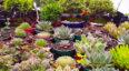 Festival navideño de suculentas y plantas exóticas | Diciembre 2019