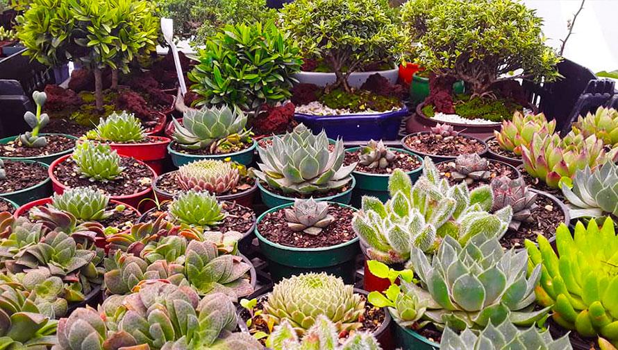 Festival navideño de suculentas y plantas exóticas