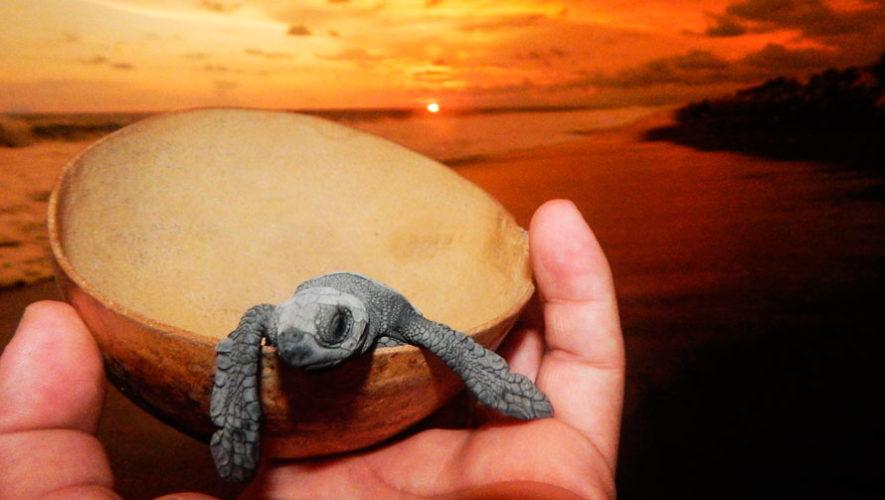 Liberación de tortugas y tour en manglar   Diciembre 2019