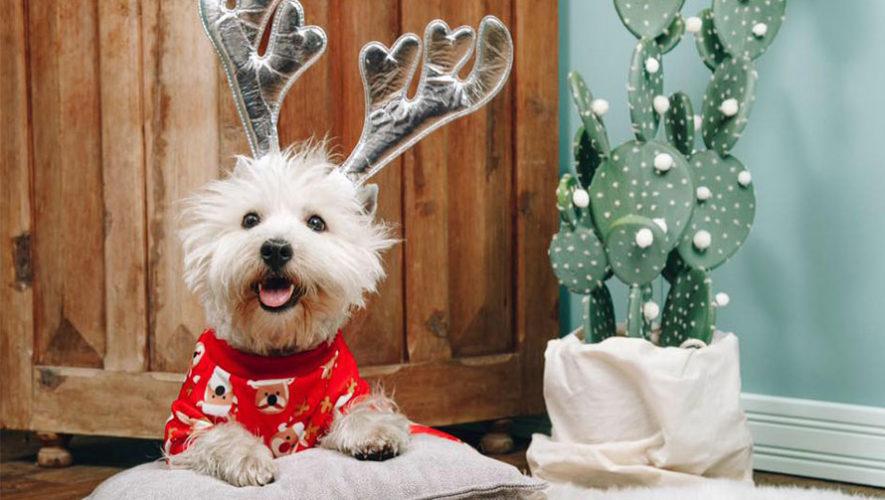 Sesiones fotografías navideñas y bazar para mascotas | Diciembre 2019