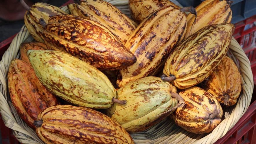 Taller de cacao y chocolate en Ciudad de Guatemala | Noviembre 2019